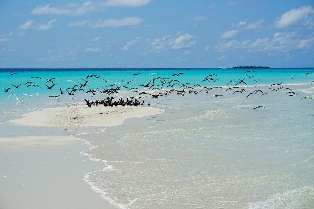 sand-bank-maldives